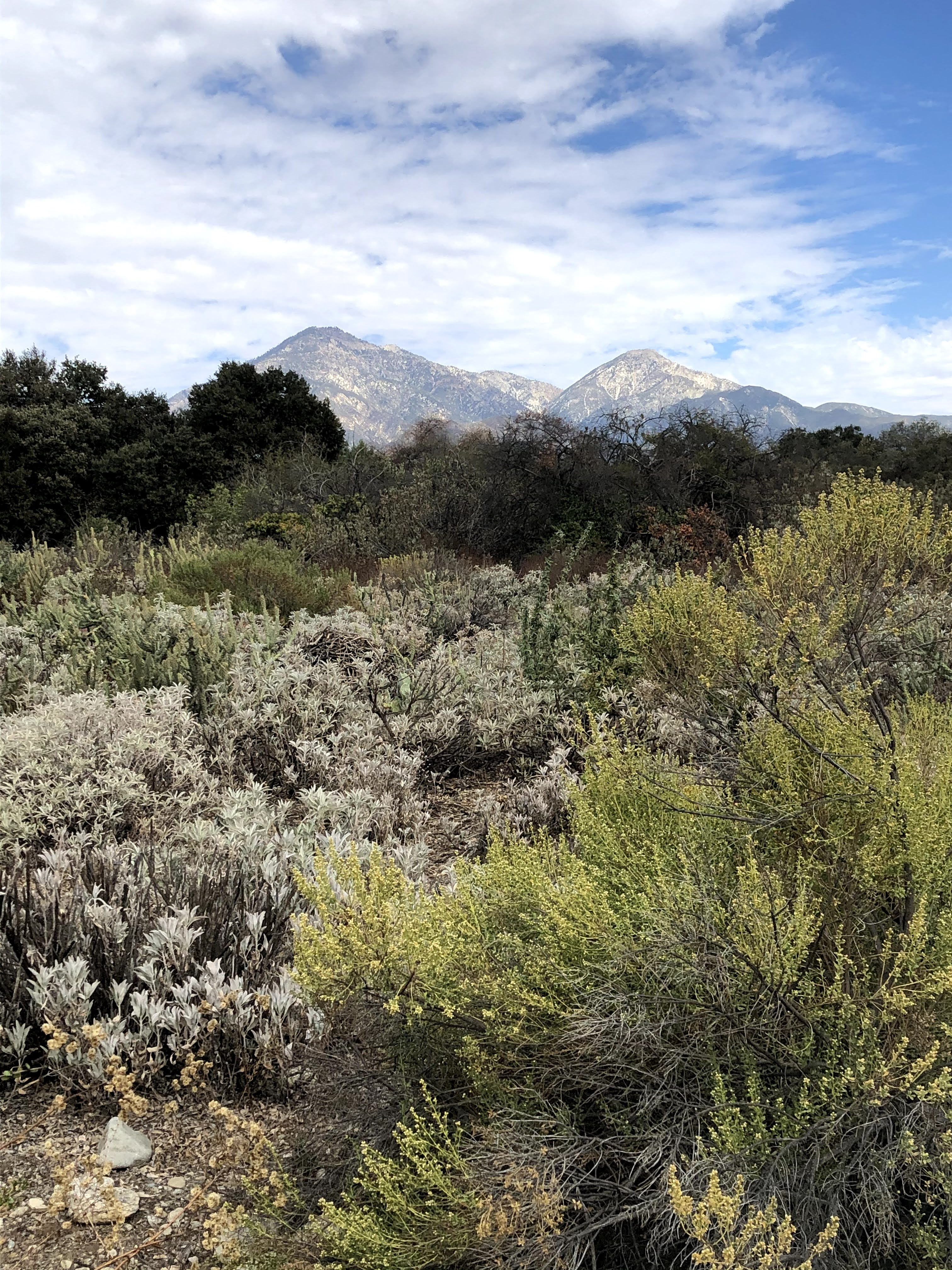California Botanical Garden with San Gabriel Mountains in the background.